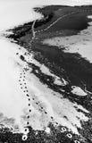 Tierabdrücke auf Schnee und gefrorenen See Lizenzfreie Stockbilder