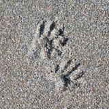 Tierabdrücke im grobkörnigen Sand Lizenzfreie Stockfotos