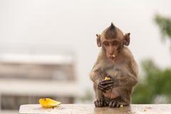 Tieraffe, der auf konkretem Boden sitzt Stockfotografie