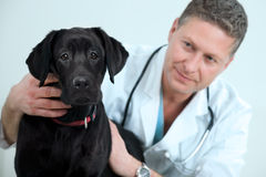 Tierarzt Lizenzfreie Stockfotografie