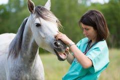 Tierarzt auf einem Bauernhof Lizenzfreies Stockfoto