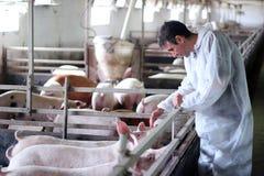 Tierarzt bei der Arbeit Lizenzfreie Stockfotografie