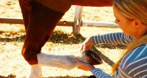 Tierarzt, der Hufeisen in der Ranch 4k betrachtet stock video footage