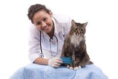 Tierarzt haben Prüfungskatze mit dem wunden Fahrwerkbein Lizenzfreie Stockfotos