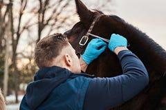 Tierarzt lässt eine externe Prüfung von einem Pferd Papillomas auf einer Ranch draußen finden stockfoto