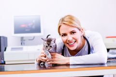 Tierarzt mit dem Stethoskop, das kleine kranke Katze hält Lizenzfreie Stockfotografie
