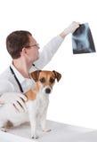 Tierarzt mit Hund ist Holding Röntgenstrahlbild. Lizenzfreie Stockfotos