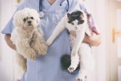 Tierarzt mit Hund und Katze lizenzfreies stockbild