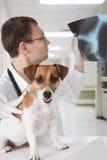 Tierarzt mit Hund und Röntgenstrahl Stockbilder