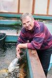 Tierarzt mit koi Fischen Stockfoto