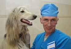Tierarzt und Afgan Jagdhund. Lizenzfreies Stockfoto
