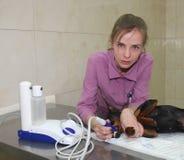 Tierarzt und Hund. Stockfotografie