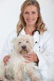 Tierarzt und Hund Stockbild
