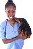 Tierarzt und Hund stockfoto