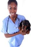 Tierarzt und Hund Stockfotos