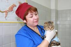 Tierarzt und Katze. Lizenzfreies Stockbild