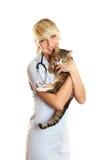 Tierarzt und Katze Lizenzfreie Stockfotos