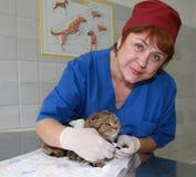 Tierarzt und Katze an der Klinik. Lizenzfreie Stockfotos