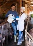 Tierarzt und Landwirt im Schweinestall stockbilder
