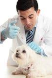 Tierarzteinspritzung zum Genick des Hundes des Stutzens Stockbilder