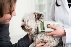 Tierarztspezialist, der kranken Hund in der Klinik überprüft lizenzfreie stockbilder