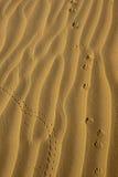 Tierbahnen in den goldenen Wüsten-Sanden Lizenzfreie Stockfotos