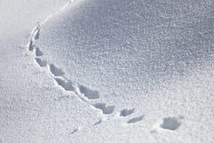 Tierbahnen im Schnee Stockfoto