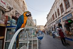 Tierbasar in Souq Wakif, Doha, Katar lizenzfreie stockfotos
