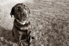 Tierbegriffsbild. Lizenzfreies Stockbild
