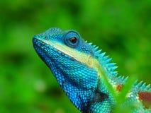 Tierchamäleon Thailand lizenzfreies stockbild