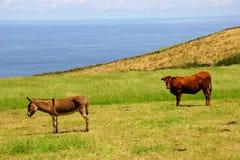 Tiere lizenzfreie stockfotos