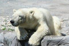 Tiere lizenzfreies stockfoto