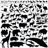 Tiere stock abbildung