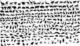 Tiere Stockbild