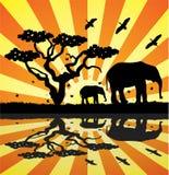 Tiere in Afrika Lizenzfreies Stockbild
