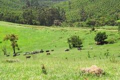 Tiere auf einem grünen Feld Stockbilder