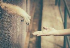 Tiere begrenzt gegen Freiheit Stockbild