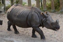 Tiere in Busch-Garten Lizenzfreie Stockfotografie
