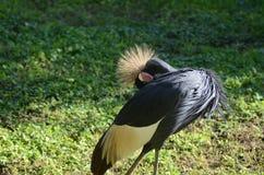 Tiere in Busch-Garten Lizenzfreies Stockfoto