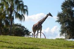 Tiere in Busch-Garten Stockbild