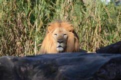 Tiere in Busch-Garten Stockfotografie