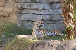 Tiere in Busch-Garten Stockfotos