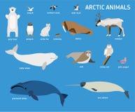 Tiere der Arktis Vektor-Satz polare Säugetiere und Vögel Stockbild