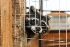 Tiere in der Gefangenschaft lizenzfreie stockbilder