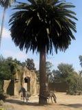 Tiere an der Palme Stockbilder