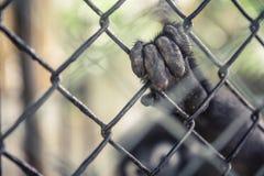 Tiere der wild lebenden Tiere im Gefangenschaftskonzept Stockfoto