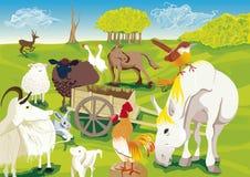 Tiere des Bauernhofes Lizenzfreies Stockfoto