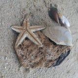 Tiere des Meeres Lizenzfreies Stockfoto