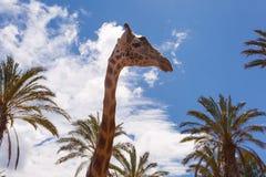 Tiere des Oasen-Parks, Fuerteventura, Spanien stockfotografie
