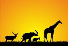 Tiere, die bei Sonnenuntergang gehen Stockfotos